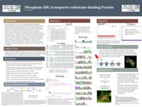 2017 - Phosphate ABC transporter substrate-binding Protein - Poster Presentation